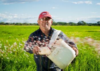 Tahan Banting: Inilah Daftar Saham Sektor Agriculture yang Menjanjikan